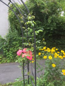 rosenbogen04