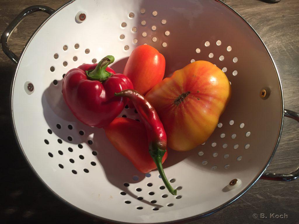 tomate_paprika_chili-hochbeet