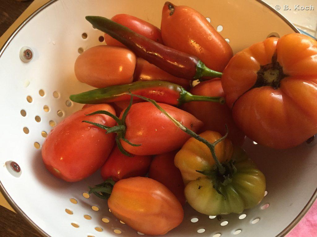 letzte-tomatenernte